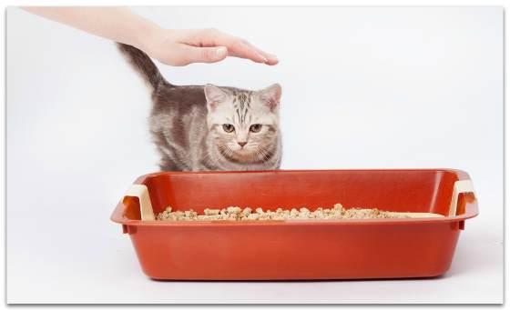 Простые рекомендации, которые помогут вам быстро приучить маленького котенка ходить в лоток