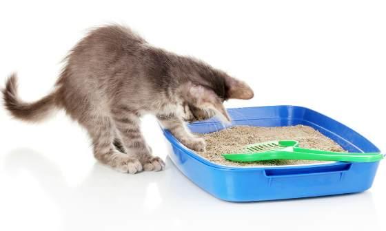 Виды наполнителей для кошачьего туалета - выбираем лучший вариант