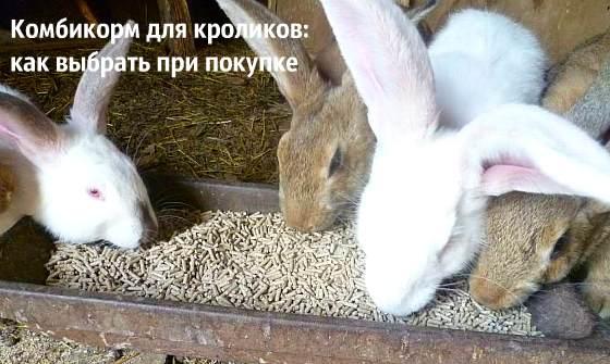 Секреты выбора и приготовления хорошего комбикорма для ваших кроликов