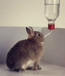 Как сделать простую поилку для кроликов из подручных средств за 10 минут