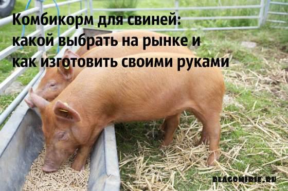 Инструкция по приготовлению комбикорма для свиней своими руками, советы по выбору