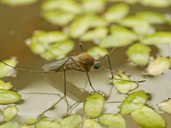 Какая взаимосвязь между малярией и заболоченными районами?