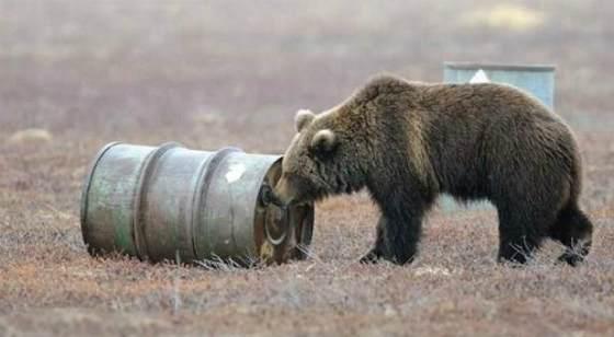 Медведи алкоголики