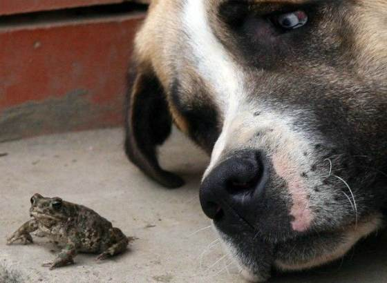 собака и жаба