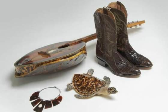 сувениры из черепахи