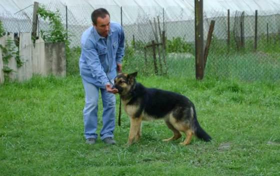 Как приготовить своими руками лакомства для дрессировки собак