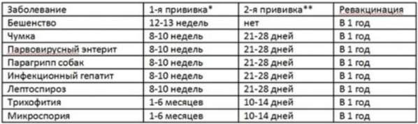 privivki-sobakam-kalendar