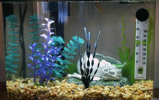 Как ухаживать за домашним аквариумом: инструкция для начинающих