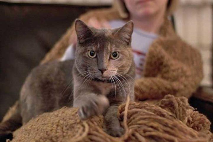 Почему кошки иногда топчут человека лапками и мурчат - интересные факты