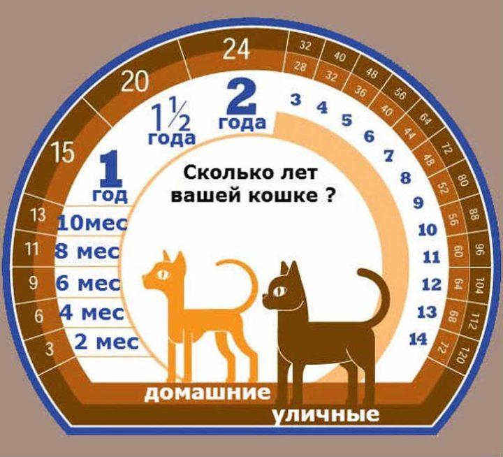 Сколько лет может прожить ваша кошка по человеческим меркам, и от чего зависит продолжительность жизни