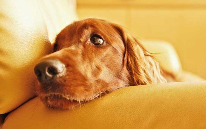 Когда можно стерилизовать собаку: подходящий возраст, особенности и результаты процедуры