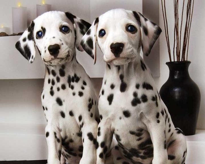 Выбираем собаку для ребенка - обзор подходящих пород, которые можно содержать в квартире