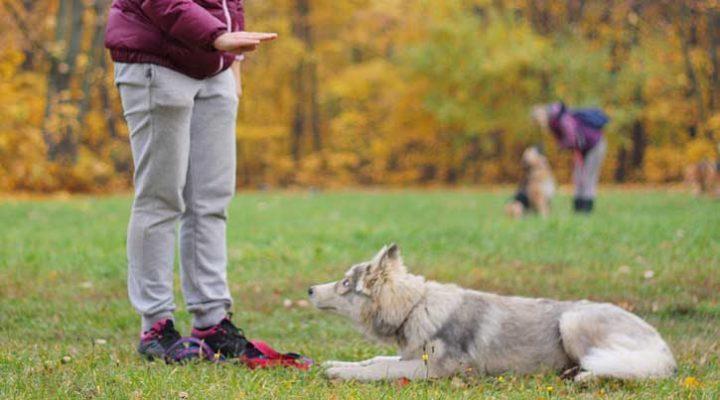 Методы и секреты обучения собак команде «голос»