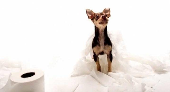 Как приучить вашу собаку или щенка ходить в туалет на улице и дома - практические советы
