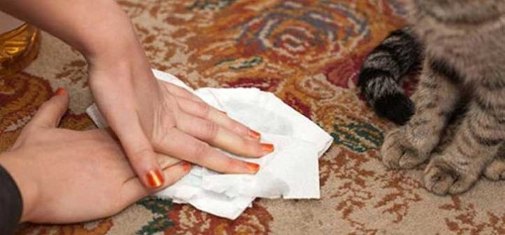 Отучаем кошку или кота писать и гадить где попало - проверенные способы