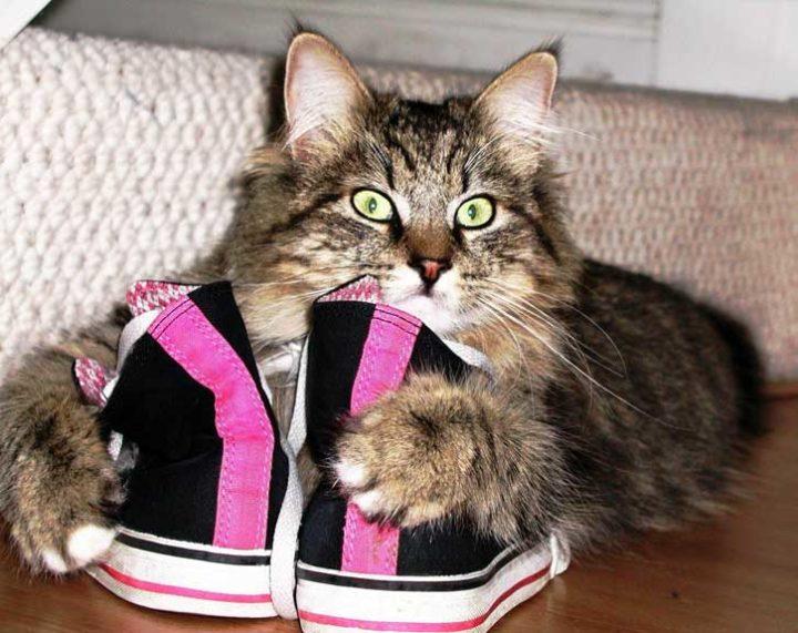 Эффективные способы избавления от запаха кошачьей мочи на вещах в квартире