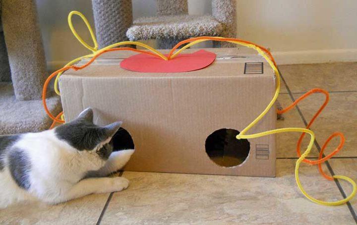 Советы по изготовлению простых игрушек для вашей кошки своими руками