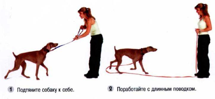 Сам себе кинолог: как научить собаку выполнять базовый набор команд и слушаться хозяина