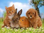 Декоративные животные: кролик, хомяк и крыса