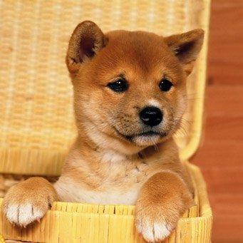 Где покупать собаку?