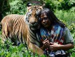 Индонезиец завел себе тигра