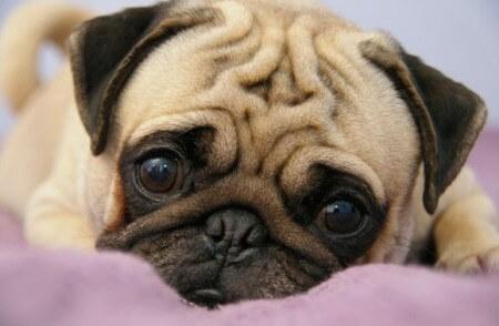Как лечить депрессию у собак?