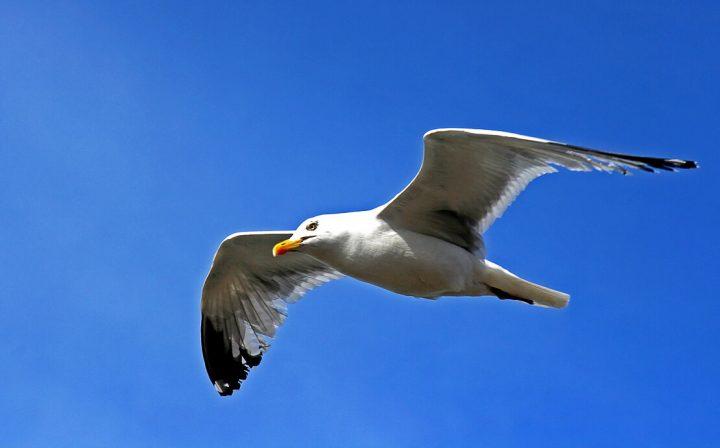 Как летит птица?