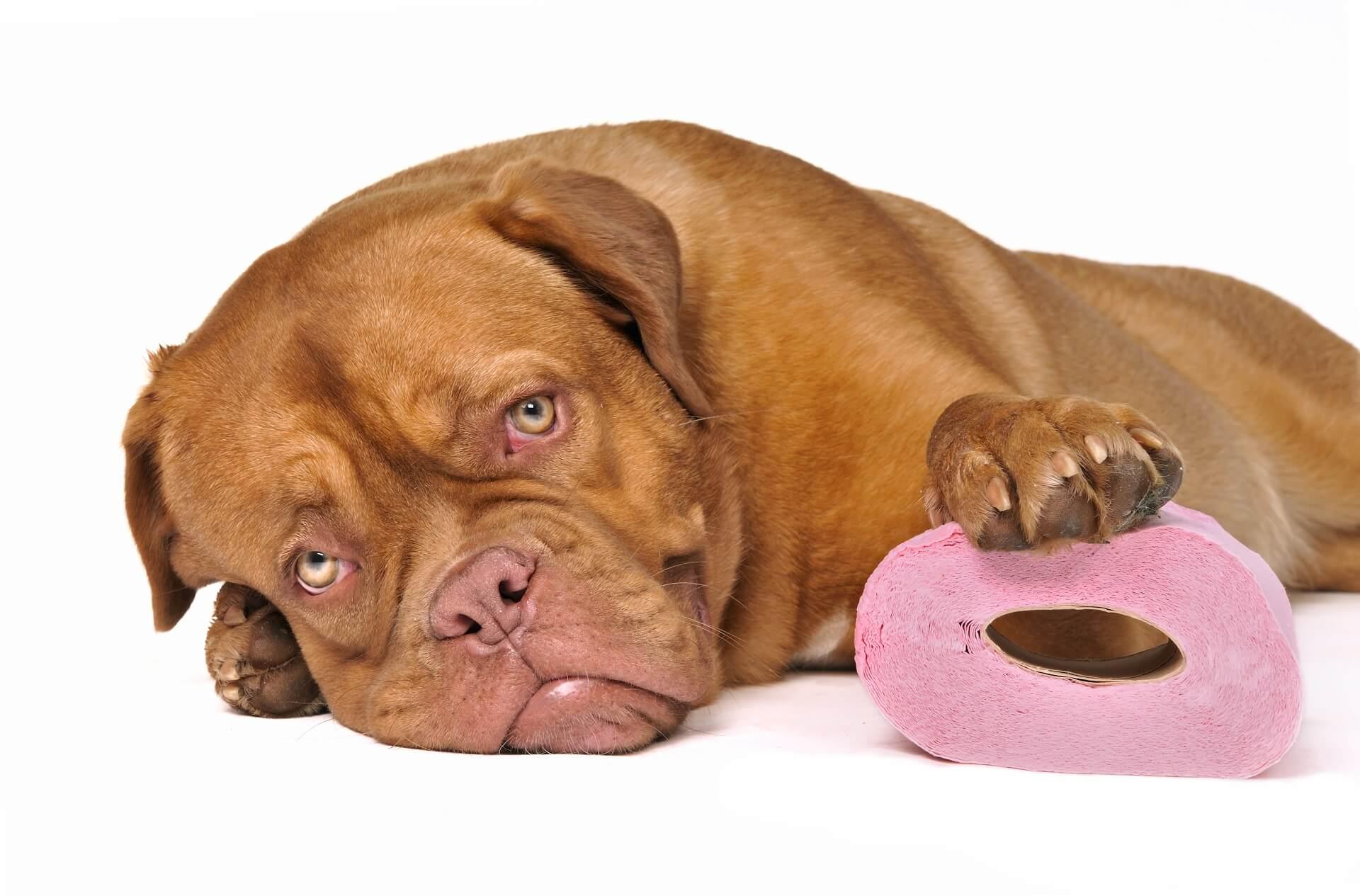 Как оказать первую помощь при отравлении собаки?