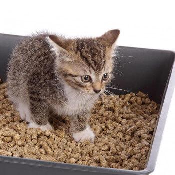 Как выбрать туалет для кота и как к нему приучить?