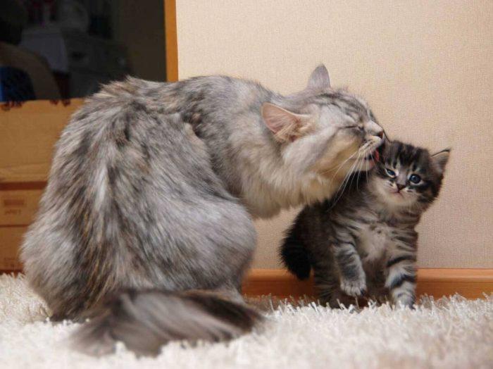Как заботиться о котятах