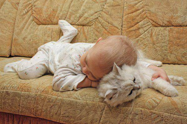 Кошка и ребенок