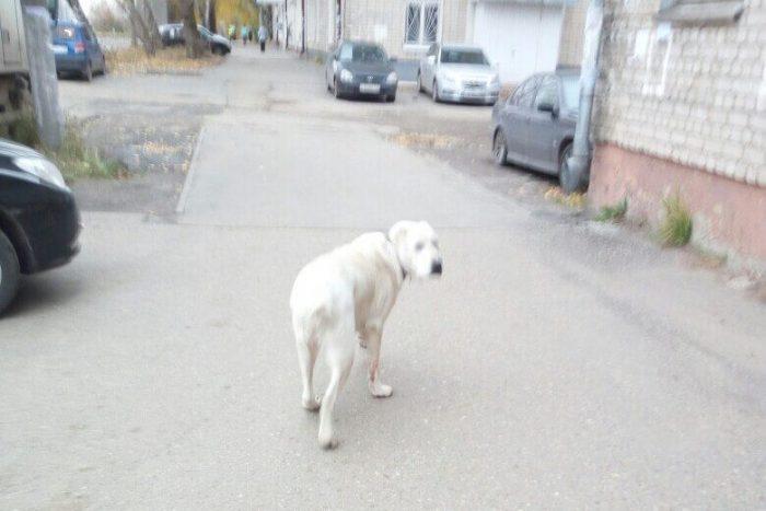 Московские дети стали свидетелями убийства собаки