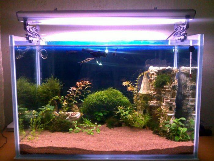 О грунте в аквариуме