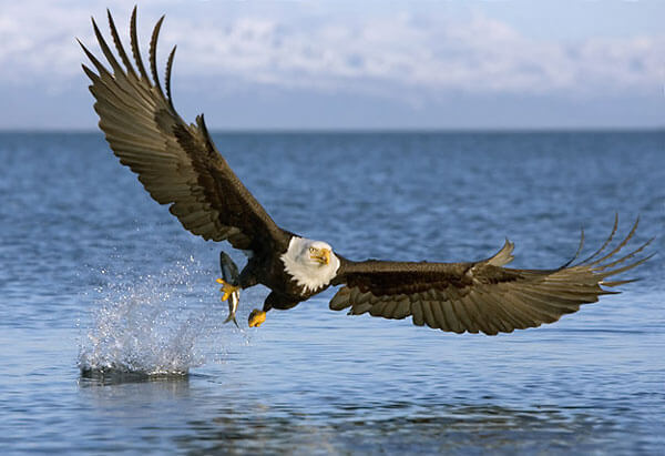 Посадка птиц