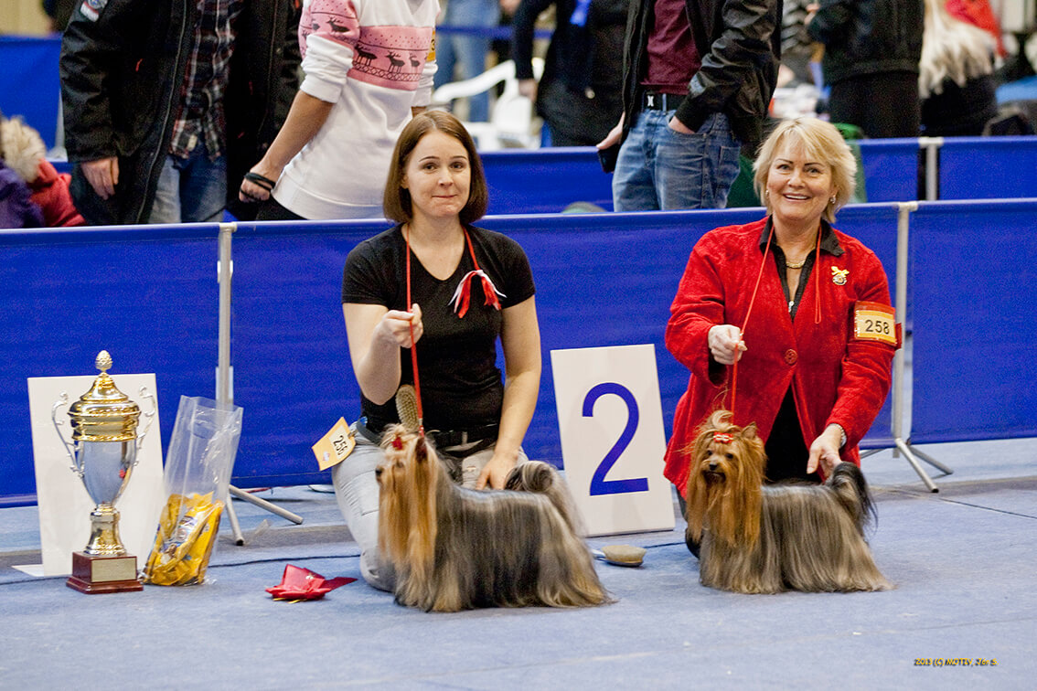 Правила собачьих выставок