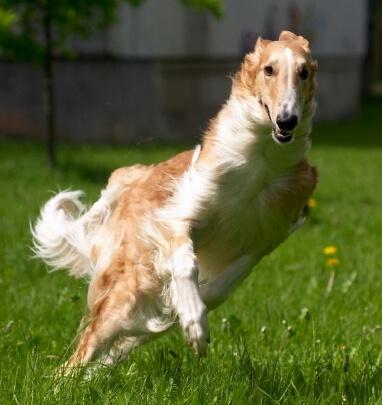 Разновидности пород собак для охоты