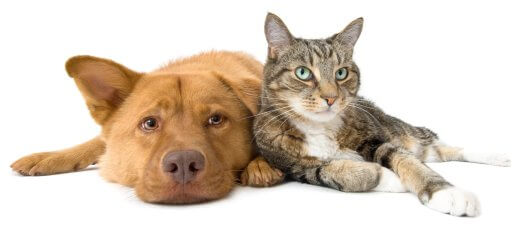 Товары для животного - как сделать правильный выбор?