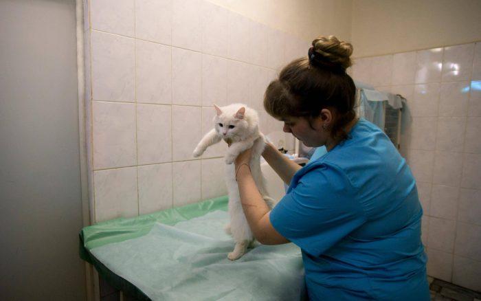 Ветеринарная клиника спасает жизни домашних питомцев