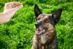 Воспитание щенка – кто кого?