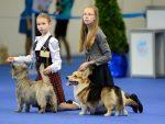 Выставки собак - основные правила
