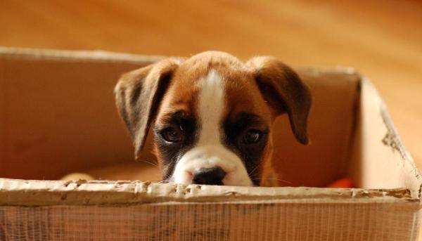 Заводчик или частное лицо - у кого лучше выбирать собаку