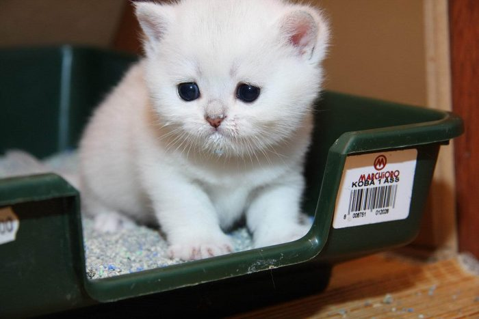 Знакомство с питомцем (котёнком)