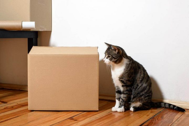 Чем кошку привлекает пластиковый пакет?
