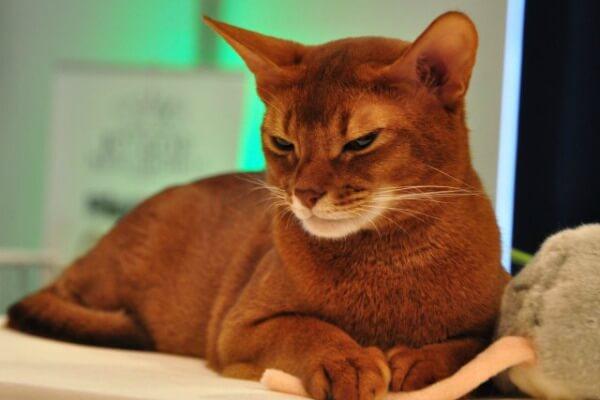 Чем поведение кота отличается от поведения кошки?