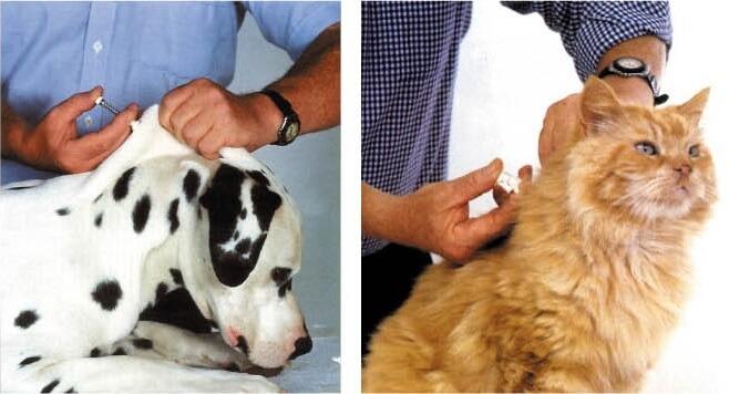 Чипирование домашних животных