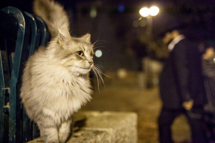 Что делать если кошка пропала