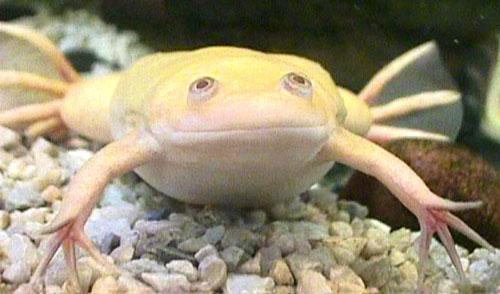 Домашние лягушки