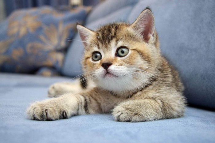 Где покупать котёнка?