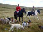 История происхождения собак