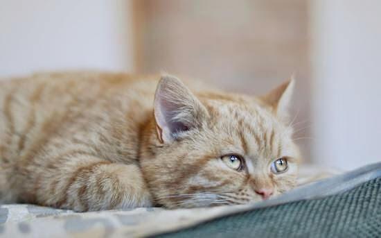 Как кошка болеет